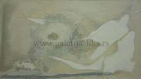 Cvetko Lainovic 80x135cm
