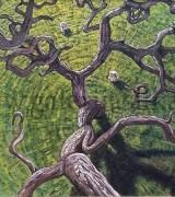Sasa Montiljo 50×70 cm